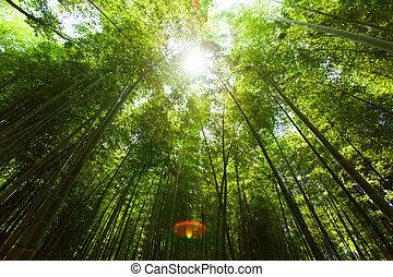Light of the sun and bamboo forest