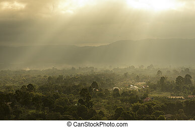 Light of tropical forest landscape