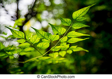 Light on green leave in the forest1