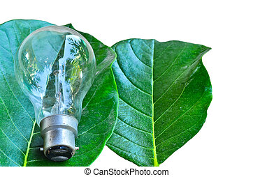 Light on the leaves