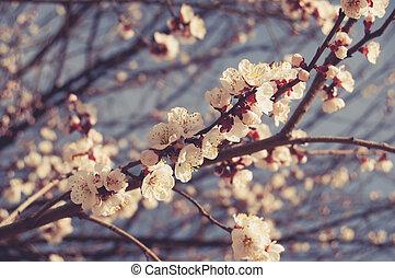 Light pink cherry blossom against blue sky