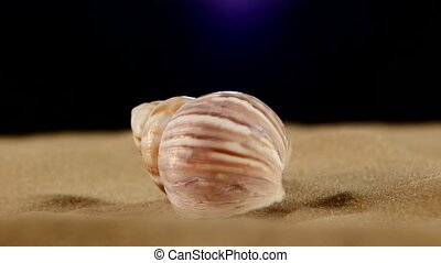 Light pink sea shells with sand and back light, rotation, on black