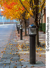 Light Posts in Fall
