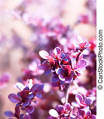 Light purple plant