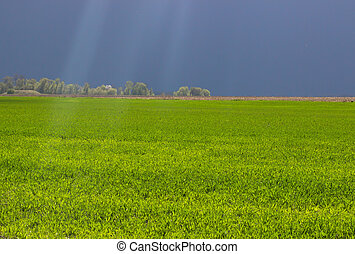 light rays fall on the grass. Background - light rays fall...