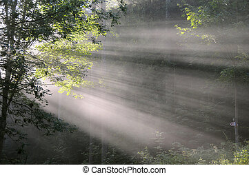 Light shaft through trees