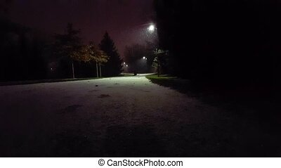 Light Snow Fall in Park at Night. Light Snowing With Low Wind. First Snow Falling of the Season.