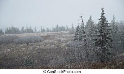 Light Snowfall Over Alaskan Ravine - Winter's first snowfall...