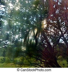 light streaks through tree branches