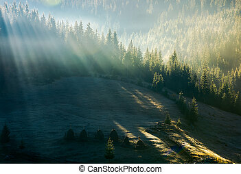 light through fog in forest on hill. gorgeous nature...