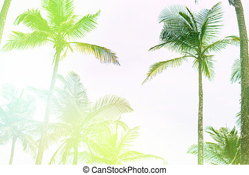 Light Toning Silhouettes of palm trees against the sky during