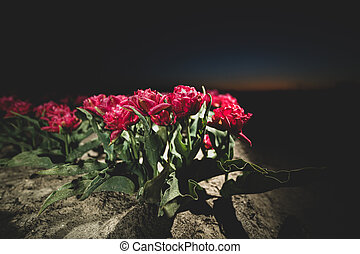 Light up bulb field with blooming flowers against nightfall
