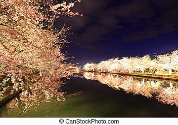 Light up of cherry tree
