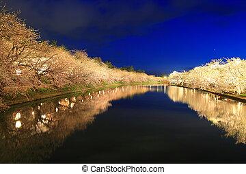 Light up of cherry tree in Hirosaki castle, Aomori, Japan