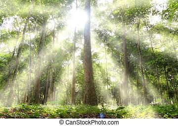 Light woods. - The sun shining through the trees.