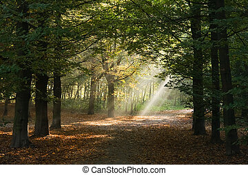 Lightbeams in forest