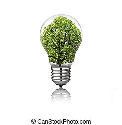lightbulb, 中, 木, 隔離された