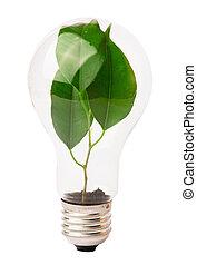 lightbulb, 成長する, 植物, 中