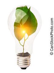 lightbulb, met, plant, groeiende, binnen