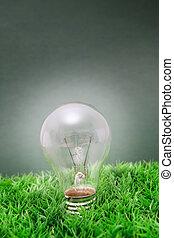 lightbulb on green grass