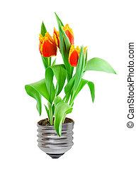 lightbulb, roślina, eco, tulipany, concept:, bulwa