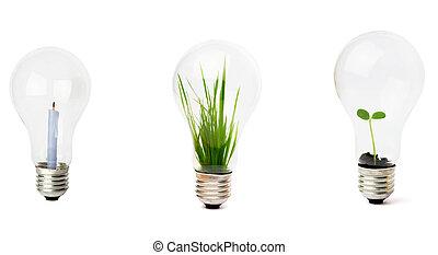 lightbulb, wachsen, pflanze, innenseite
