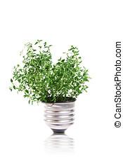 lightbulb with green plant inside