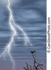 lightening, árvore, pássaro