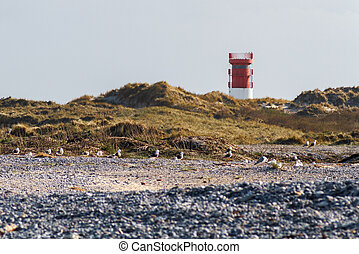 Lighthouse on the dune of Helgoland with seagulls and pebbles