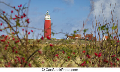 Red rose hips with scenic view of Lighthouse at Waddenisland Texel, North Holland, Netherlands