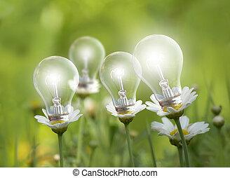 lighting flower bulbs on a green meadow