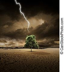 Lighting on desert tree