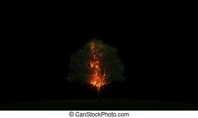 Lightning burns a tree