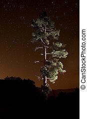 lightpainted, árbol, en, el, bosque, por la noche
