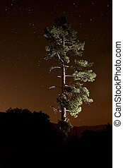 Lightpainted Tree in the Forest at Night