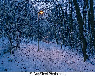 lightposts, in, de, winter, park
