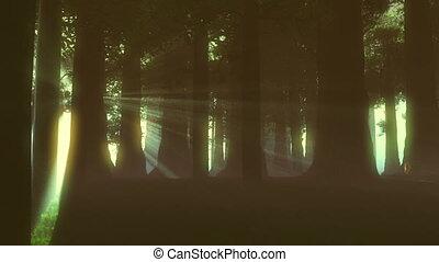 lightrays, nadprzyrodzony, las, 4