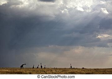 lights in the savanna in kenya