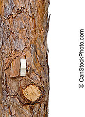 Lightswitch in a tree trunk, can represent renewable resources or consumption of resources/forests