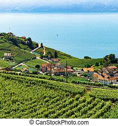 ligne ferroviaire, dans, lavaux, vignoble, terrasse, lac genève, suisse