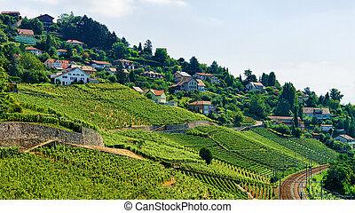 ligne ferroviaire, dans, lavaux, vignoble, terrasses, suisse