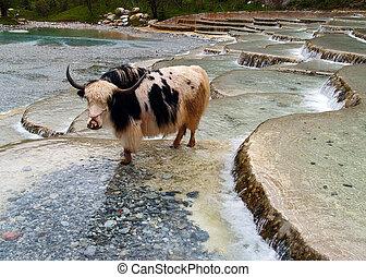 Lijiang China - a top tourist town