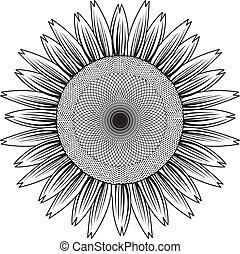 lijn, vector, zonnebloem, uit
