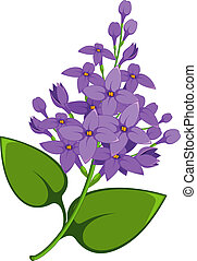 lilás, ramo