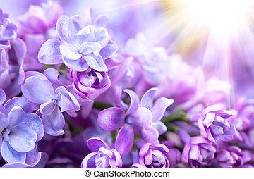 lila, blomningen, bukett, violett, konst, design, bakgrund., vacker, violett, lila, blomma, närbild