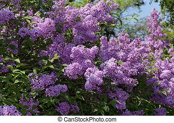lila busch