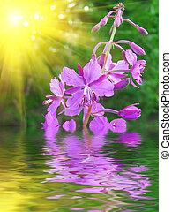 lila, flor