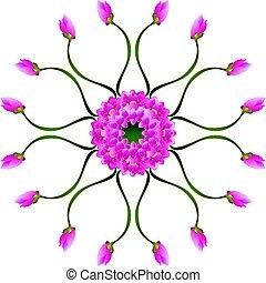 lila, lotusblüte