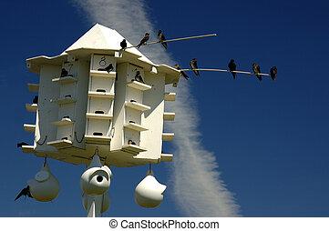 lila, mehlschwalbe, vogelhaus