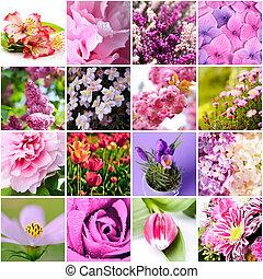 rosafarbene blume kleingarten hortensie busch blumen. Black Bedroom Furniture Sets. Home Design Ideas